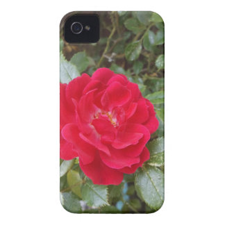 Red Rose Case-Mate iPhone 4 Cases