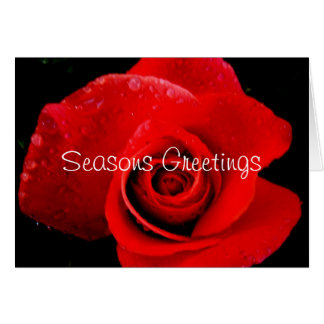 Red Rose Christmas Seasons Greetings Card