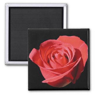 Red Rose Close Lone Magnet SQS