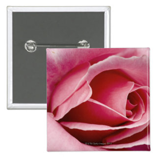 Red rose close up 15 cm square badge