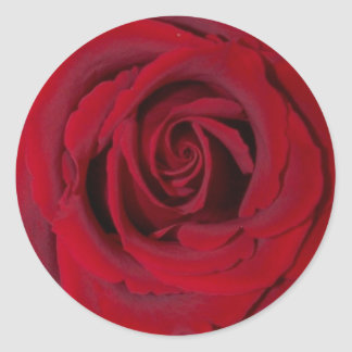 red rose close up classic round sticker