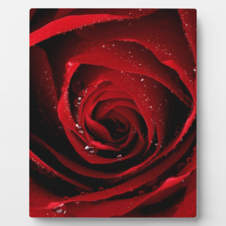 Red Rose Floral Flower Rose Petals Blossoms Dew Plaque