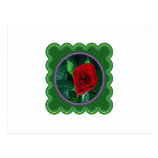 Red Rose Flower Floral Sensual Image 100 gifts Postcard