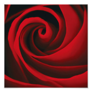 Red Rose Flower Swirl Classy Design Photograph