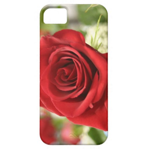 Red rose in bloom iPhone 5 covers