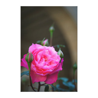 Red Rose In The Garden Of Hotel Carnavalet Stretched Canvas Prints