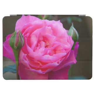 Red Rose In The Garden Of Hotel Carnavalet iPad Air Cover
