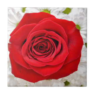 red rose in the garden small square tile