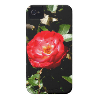 Red Rose iPhone 4 Case-Mate Cases