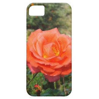 Red Rose iPhone 5 Case-Mate