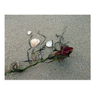 Red Rose Lost at Sea Postcard