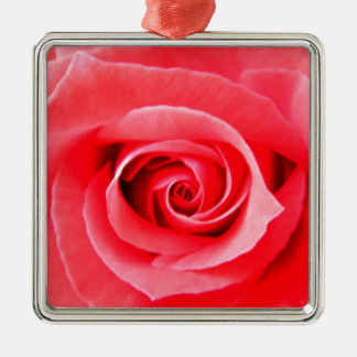 Red rose macro photo Silver-Colored square decoration