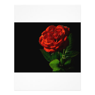 red-rose-macro-still-image-studio-photo 21.5 cm x 28 cm flyer
