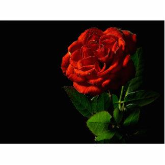 Red Rose Macro Still Image Studio Photo Standing Photo Sculpture