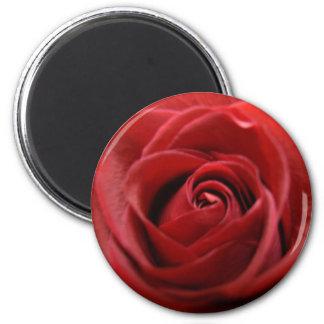 Red Rose Magnet