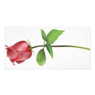 Red Rose. Picture Card