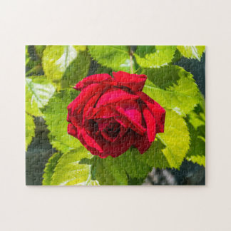 Red rose photo puzzle