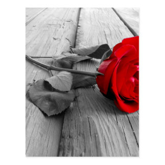 Red rose post cards