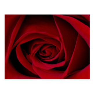 Red Rose Postcard
