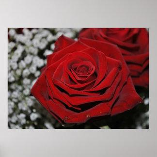 Red rose - pressure poster