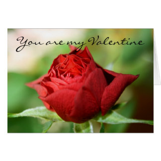 Red Rose  You are my Valentine Card