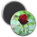 Red Rosebud Magnet