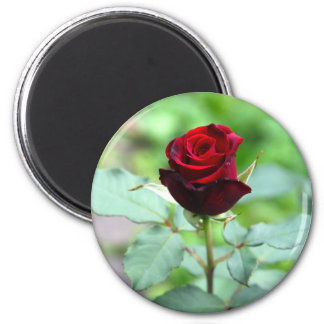 Red Rosebud Magnet Magnets