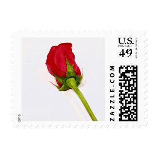 Red Rosebud postage stamp
