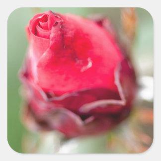 Red Rosebud Square Sticker
