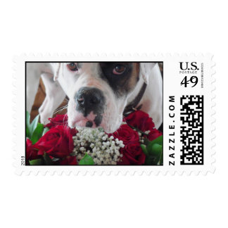 Red Roses Baby's Breath Boxer Daisy Belle Stamps