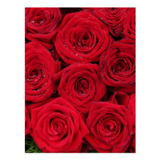 Red roses by Therosegarden Postcard