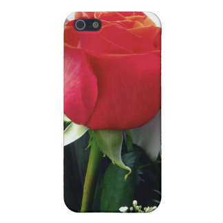 Red roses cover for iPhone 5/5S