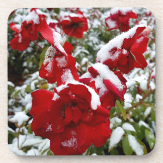 Red roses covered by snow and rime coaster