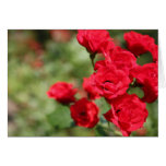 Red Roses Fade Into Focus Notecard Note Card