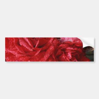 red roses in the rain bumper sticker