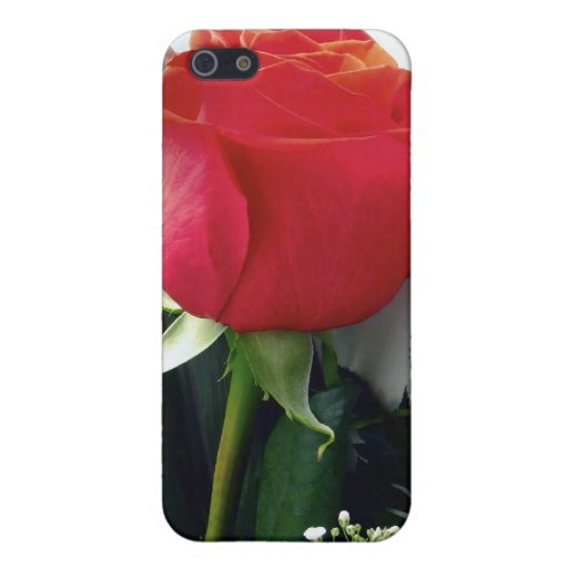 Red roses covers for iPhone 5