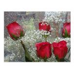 Red roses postcard