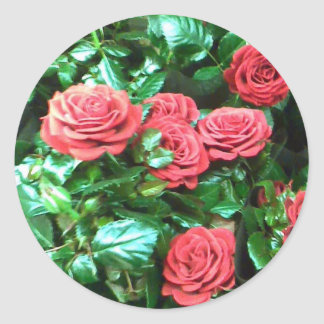 Red roses round sticker