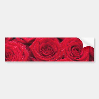 Red roses with water drops bumper sticker