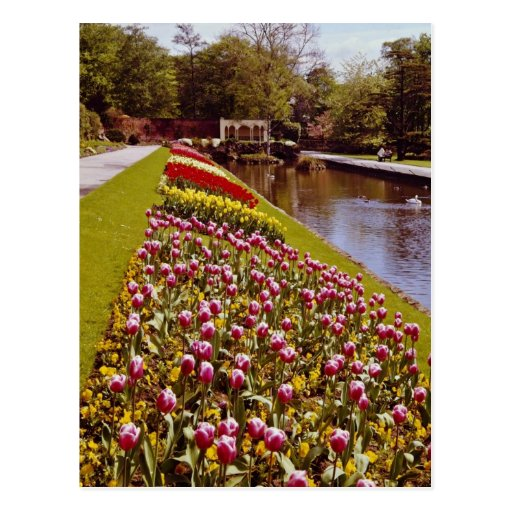 Red Roundhay Park, Leeds, England flowers Post Card