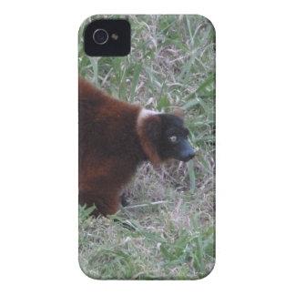 Red Ruffed Lemur 2 iPhone 4 Cases
