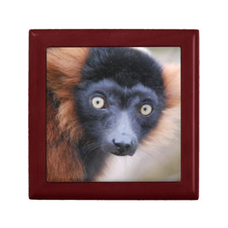 Red Ruffed Lemur Gift Box