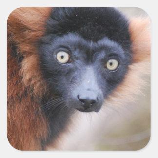 Red Ruffed Lemur Sticker