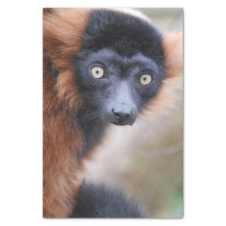 Red Ruffed Lemur Tissue Paper