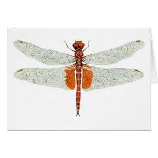 Red Saddlebags Dragonfly Watercolor Card