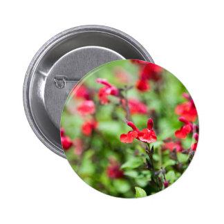 Red Salvia 6 Cm Round Badge