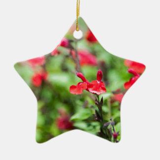 Red Salvia Ceramic Star Decoration