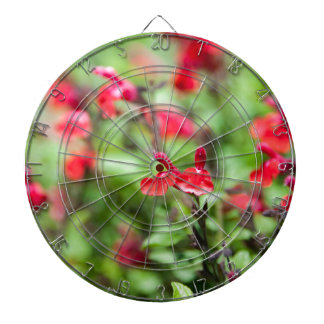 Red Salvia Dartboards