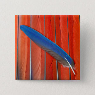 Red Scarlet Macaw Feather Still Life 15 Cm Square Badge