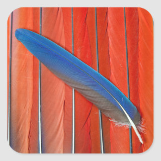 Red Scarlet Macaw Feather Still Life Square Sticker